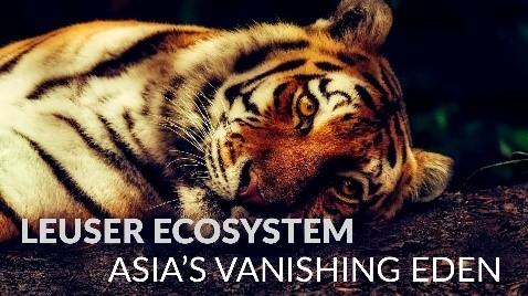 Leuser Ecosystem - Asia's Vanishing Eden